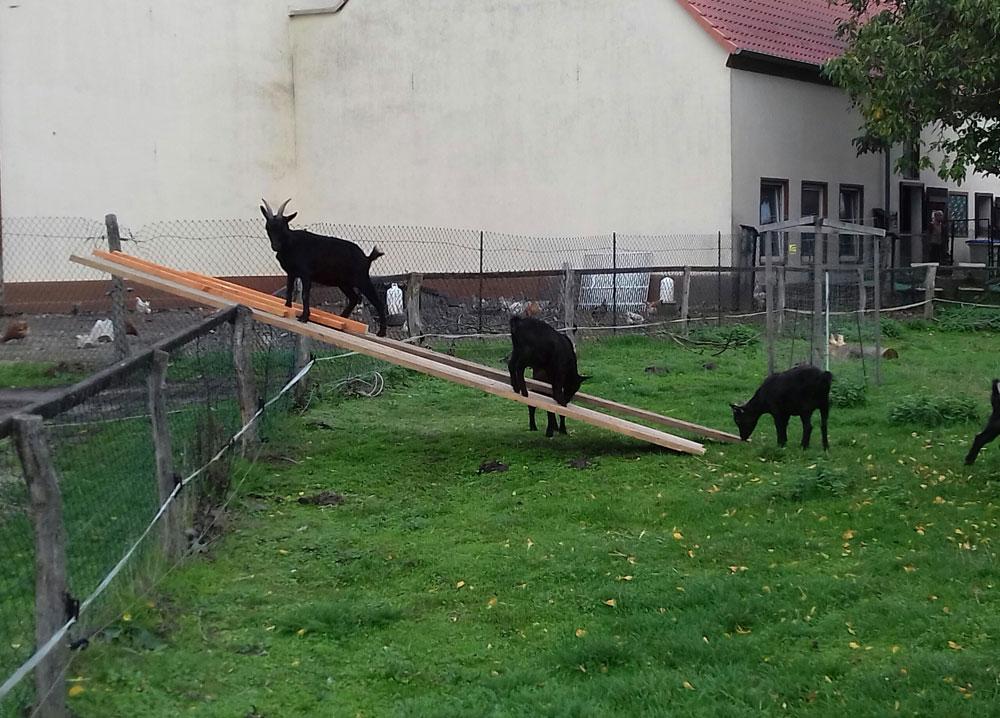 Der Röhlsche Hof - Bildungs- und Erlebnisbauernhof in Wallwitz in Sachsen-Anhalt - Unsere Tiere