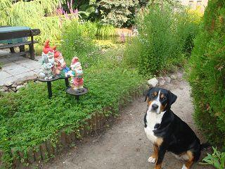 Der Röhlsche Hof - Bildungs- und Erlebnisbauernhof in Wallwitz in Sachsen-Anhalt - Unsere Tiere - Hunde-1