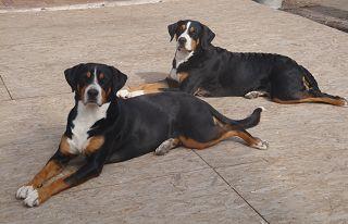 Der Röhlsche Hof - Bildungs- und Erlebnisbauernhof in Wallwitz in Sachsen-Anhalt - Unsere Tiere - Hunde-3